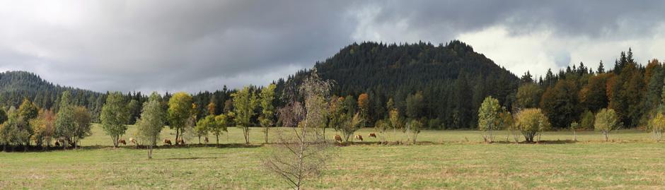 Arbres du Parc Naturel des Volcans d'Auvergne