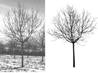 Comparaison entre photo et image virtuelle d'un arbre