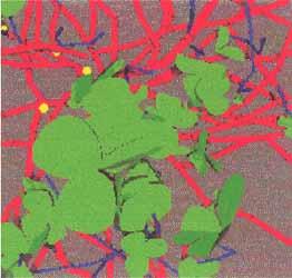 Image virtuelle d'un Couvert de trèfle blanc