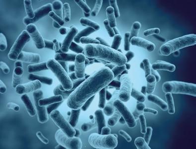 Bactérie à l'échelle microscopique
