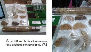 Echantillons d'especes conservees au CRB