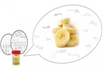 Evaluer les consommations alimentaires par des analyses d'urine