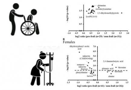 Identification de sous-phénotypes de pré-fragilité chez la personne âgée:Approche métabolomique.