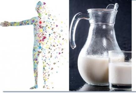 Les produits laitiers pour combattre les perturbations biologiques liées au syndrome métabolique