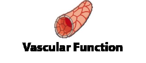 Fonction vasculaire