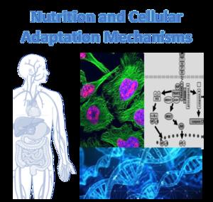 Nutrition_Cells_EN