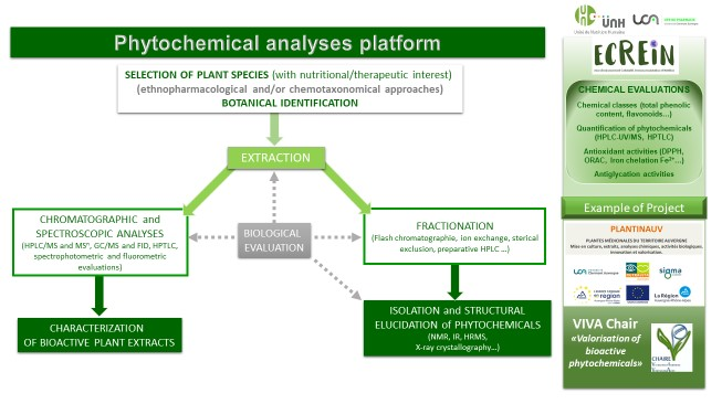 plateau phytochimie anglais
