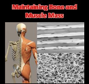 BOne Muscle Theme EN