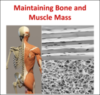 BOne Muscle Theme EN
