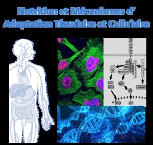 Nutrition_Cells_FR