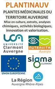 Plantes médicinales du territoire Auvergne