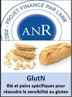 ANR glutN