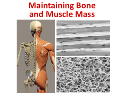 Maintaining bone and muscle mass