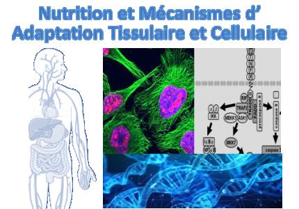 Nutrition et Mécanismes d'adaptation tissulaire et cellulaire