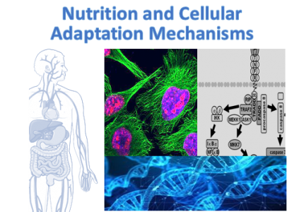 Nutrition and Cellular adaptation mechanisms